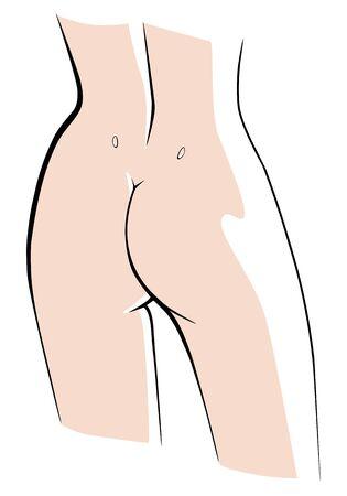 Lovely female butt back view. Vector linear illustration.