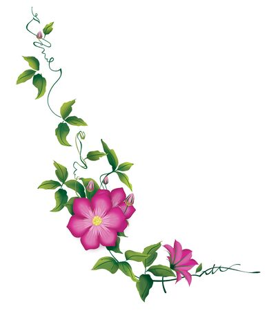 Clematis with leaves, flowering corner ornament. Illustration isolated on a white background. 版權商用圖片 - 150141293