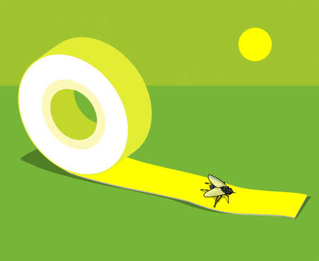 Adhesive tape with sticky fly. On green summer background.