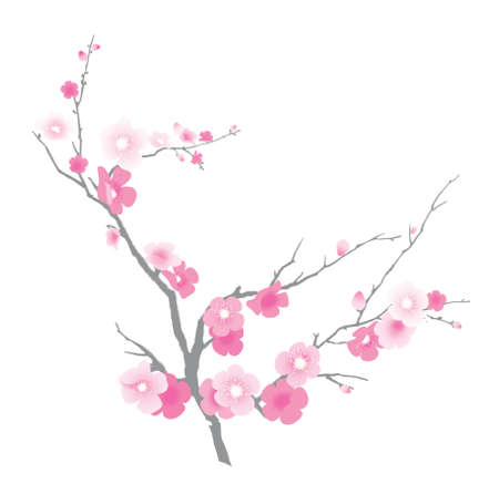 Branch of blooming sakura. Illustration. Isolated on a white background 版權商用圖片