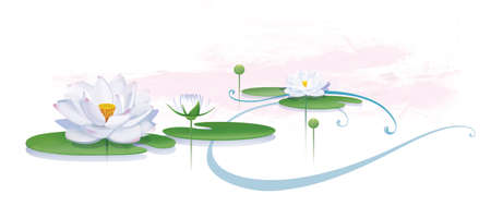 Blooming lotus with leaves and buds. Illustration. Isolated on a white background