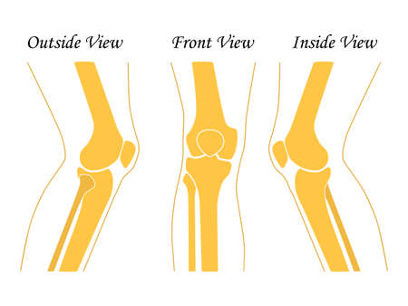 Human knee leg front and back view illustration. Flat design