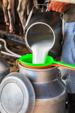 Worker pouring milk into a container Stock Photo