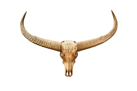 dry cow: Buffalo skull with mystic symbol isolated on white background