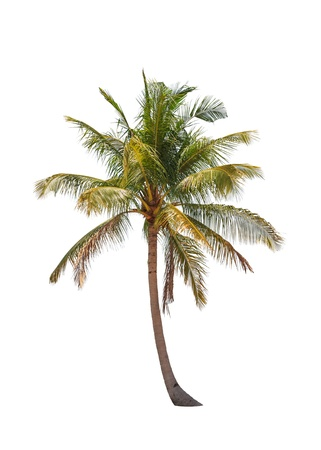 palm: Coconut palm tree isolated on white background Stock Photo