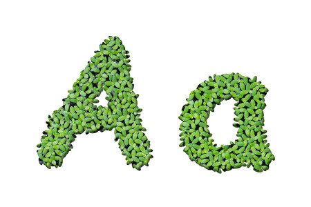 Duckweed alphabet letters A isolated on white background photo
