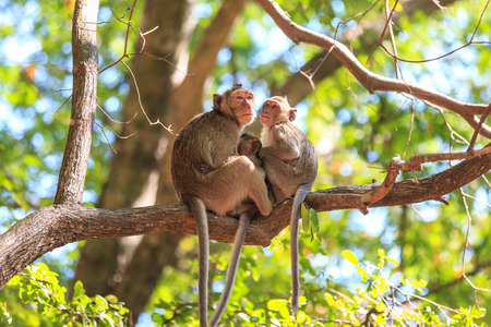 wild asia: Monkey family (Crab-eating macaque) on tree in Thailand
