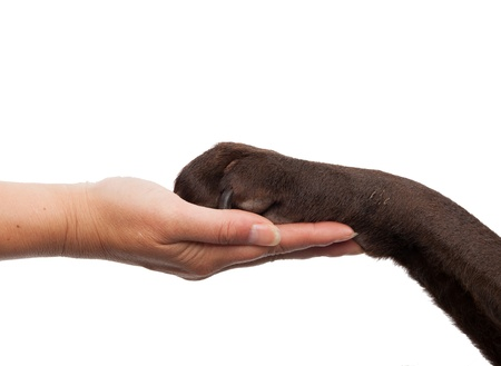 Dog paw and human hand doing a handshake photo