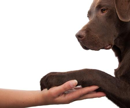 Dog paw and human hand doing a handshake photo