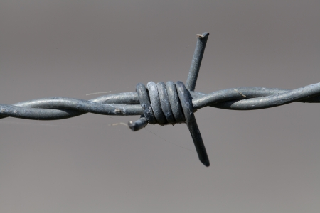 barbwire: A close-up of barbed wire against a gray background