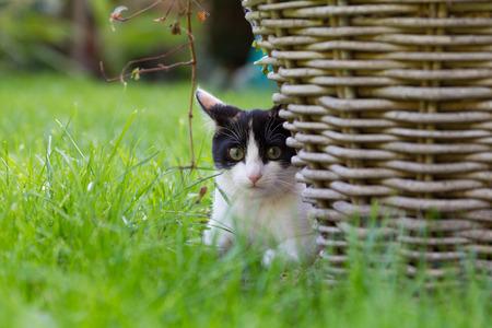 Kitten in grass next to rush basket Stockfoto