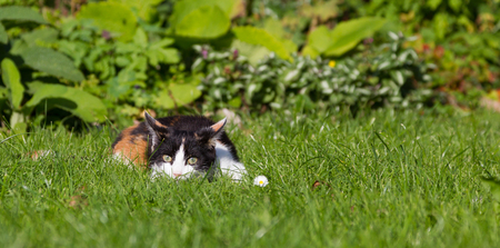 Kitten lying in grass
