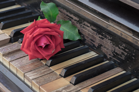 Rose on vintage antique wood piano