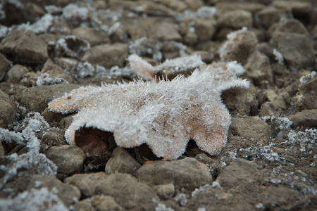 Horizontal image with shallow depth of field of a frozen oak leaf in brown color laying on a stones covered with ice crystals on a chilly autumn day Banco de Imagens