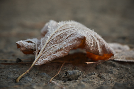 Horizontal image with shallow depth of field of a frozen leaf laying on a stones covered with ice crystals on a chilly autumn day Banco de Imagens