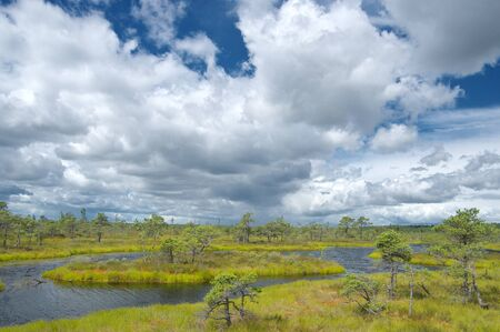 Scenic landscape with blue swamp lakes surrounded by small pine and birch trees and green moss on windy summer day with blue sky and stormy clouds in the Great Kemeri Bog Фото со стока