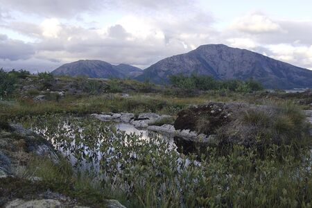 View to the mountains and strandflat vegetation from the foot of the mountain Torghatten in Torget island in Brønnøy, Nordland county, Norway on summer evening Zdjęcie Seryjne