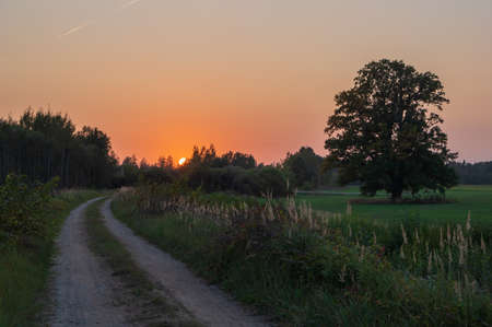 Sunset over the countryside road. Big oak growing by the road. Hiking and cycling trail on former railway line