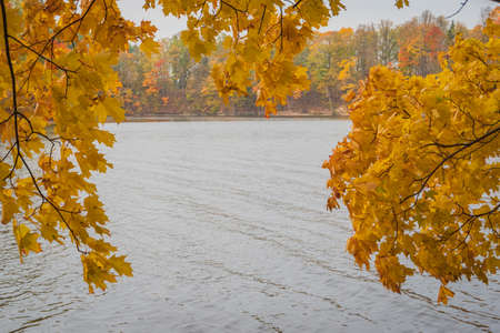 Maple tree branch with yellow leaves in autumn. Perse river with colorful red and yellow trees on the other river bank in the background. Banco de Imagens