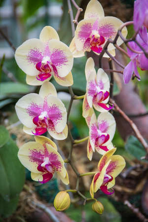 pink and yellow orchid on a branch Banco de Imagens