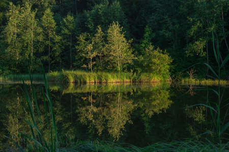 reflection of trees in the forest lake