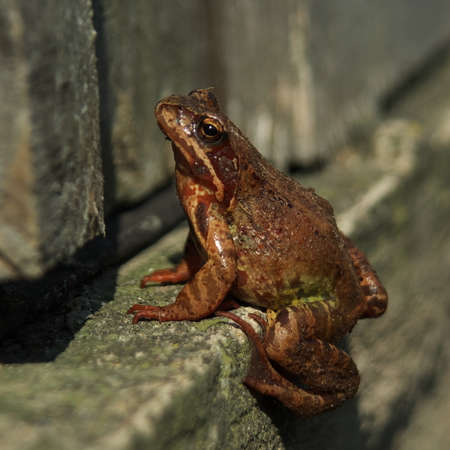 Brown frog sitting in front of an old countryside door