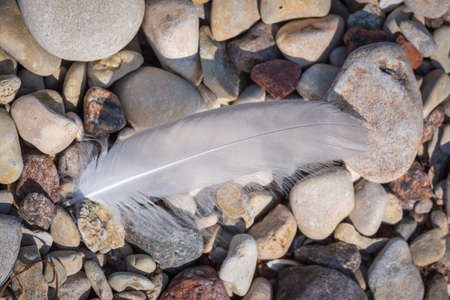 White bird feather lying on the pebbles on seaside