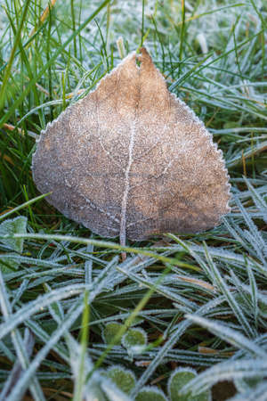 Dry brown autumn leaf on the ground covered with white frost crystals