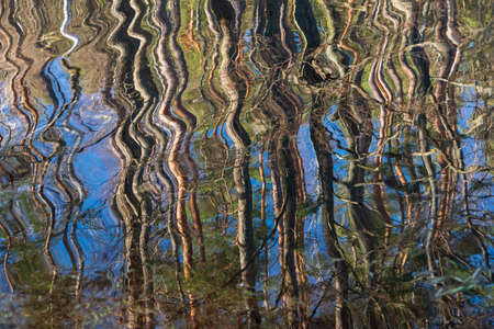 Blur tree reflection on spring water.