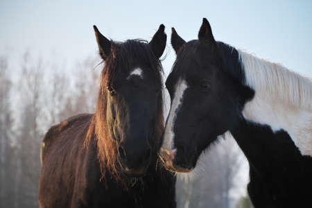 Portrait of  two horses in different colors