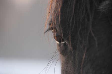Closeup of bay horse eye in the rays of evening sun Banco de Imagens