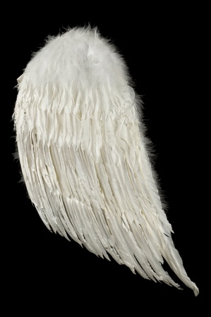 A single angel wing on a black background