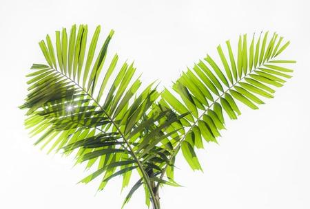 beautiful green palms at beuatiful shiny white background. Stock Photo