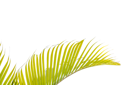 beautiful green palms at beuatiful shiny white background. Stock Photo