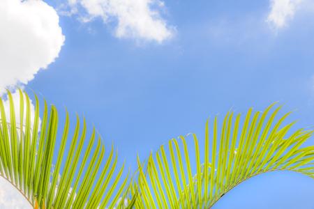 palms at beuatiful shiny blue sky background.
