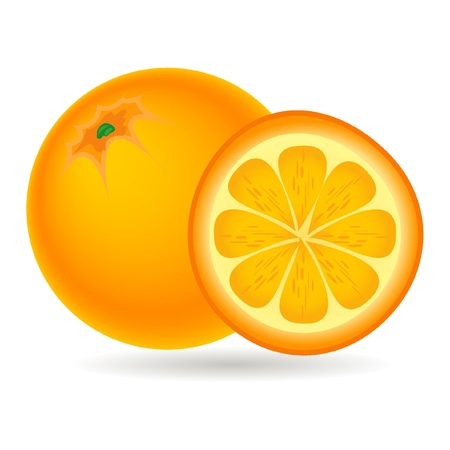 fruit illustration: orange fruit