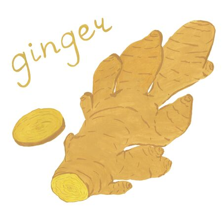Ginger root hand-drawn in gouache on paper. Spicy spices for cooking. Isolated clip art element of flavoring. Suitable for your projects: printing, menu, packaging design, labels, stickers, posters.