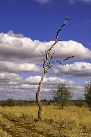 Kruger Park scenery Stock Photo