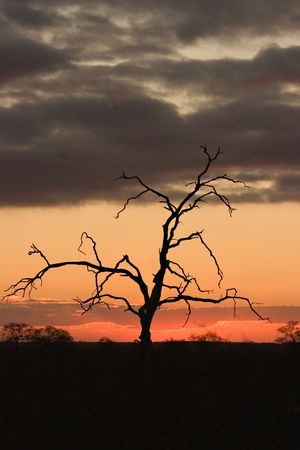 Sun setting on the Kruger Park