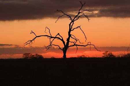 Sunset in the Kruger Park Stock Photo