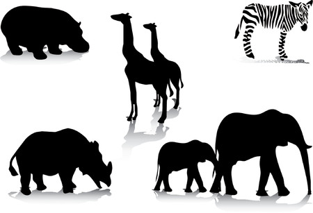 big five: Animals from africa