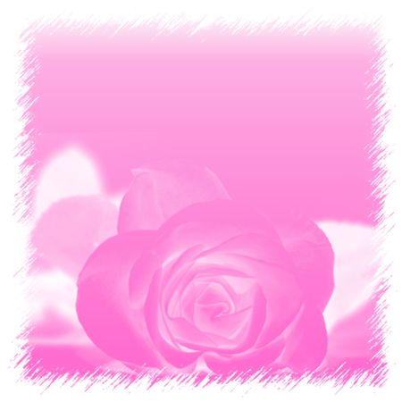 Illustration of a pink background with a pink rose