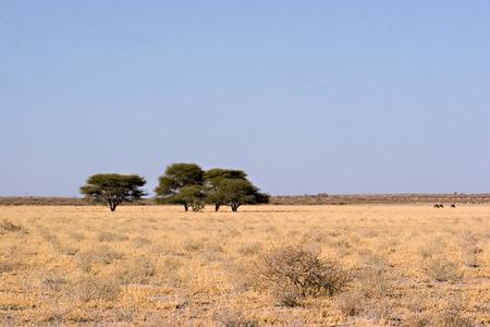 Landscape of Central Kalahari Game Reserve Botswana