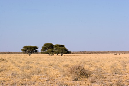 Landscape of Central Kalahari Game Reserve Botswana