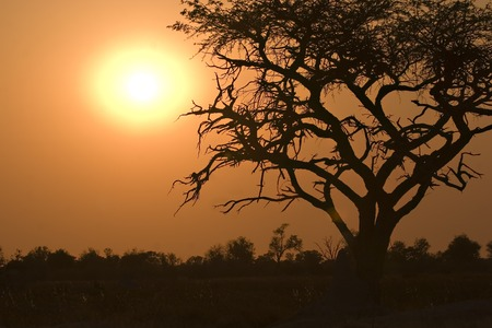 Sunrise in Moremi Game Reserve Botswana photo