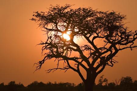 Sunrise in Moremi Game Reserve in Botswana