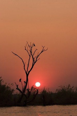 chobe: Sunset on the Chobe River in Chobe Game Reserve Botswana