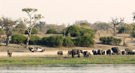 safari game drive: Veicolo game drive lungo il fiume Chobe