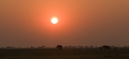 Elephant silhouettes in Chobe Game Reserve Botswana Stock Photo - 1599127