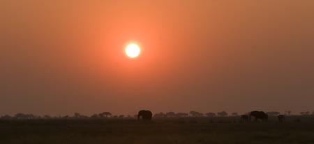 Elephant silhouettes in Chobe Game Reserve Botswana Stock Photo
